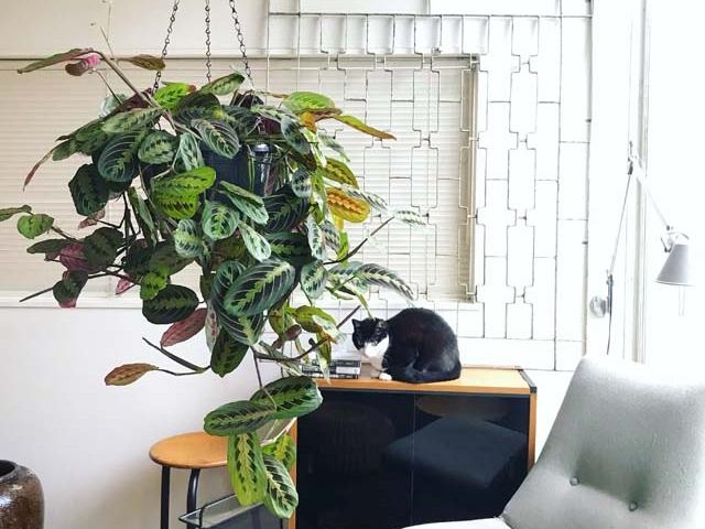 観葉植物を吊るして飾ろう!ハンギングにおすすめの種類や吊るす方法・プラントハンガーの作り方も紹介!!