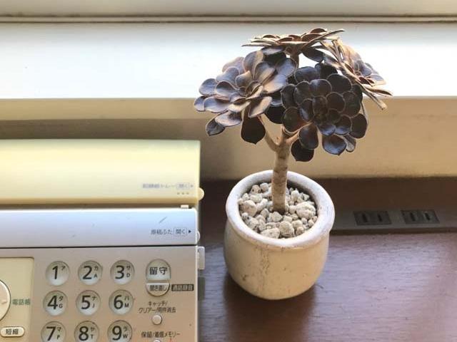 ミニ観葉植物おすすめ20選|小さなグリーンをおしゃれに飾るコツや管理方法もプロに聞きました!